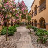 courtyard-pink-blossoms